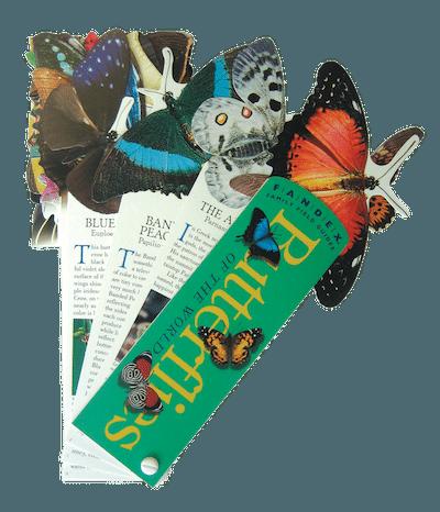 ButterflyFandexSmaller